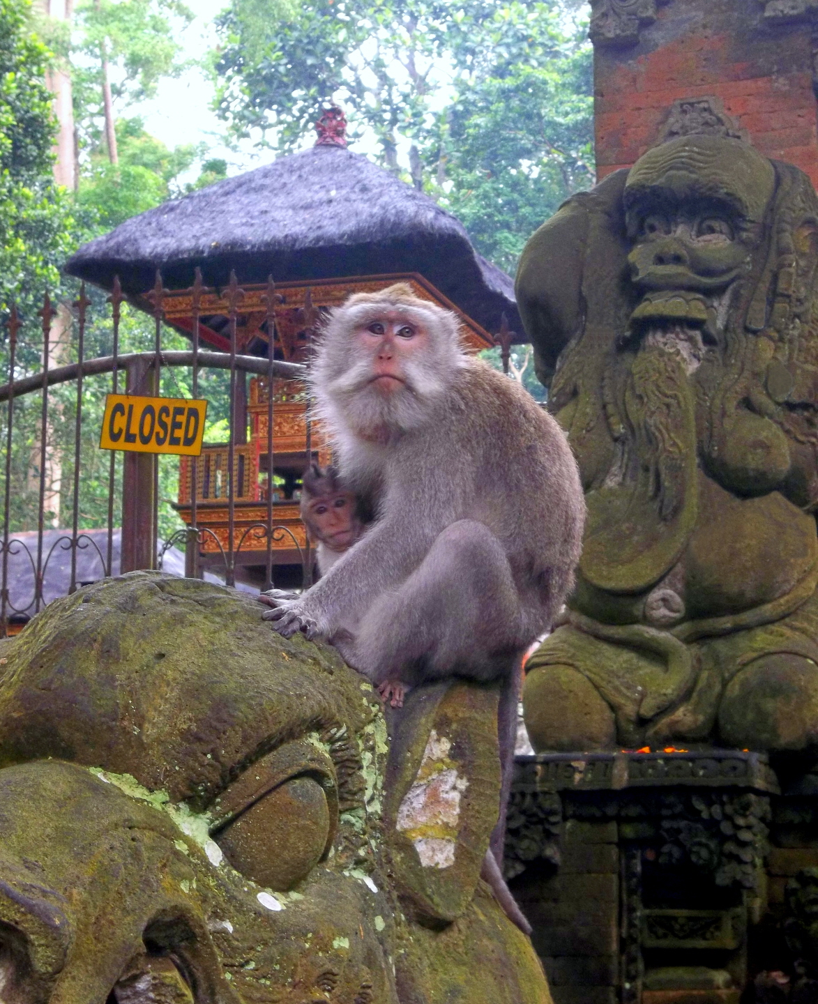 Monkey with Baby in Monkey Forest - Ubud, Bali - Indonesia